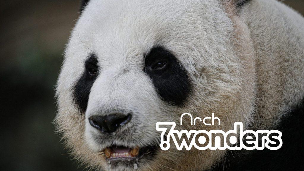 7 Wonders Panda Logo